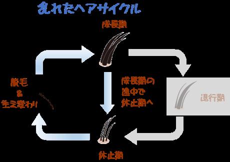 ヘアサイクル